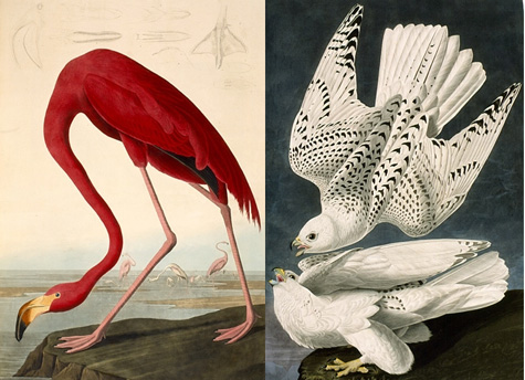 http://mhpbooks.com/mobylives/wp-content/uploads/2010/09/audubon-birds.jpg