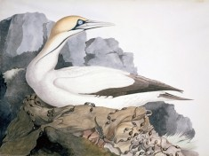 Donna Tartt's new novel will bring this gannet to life.